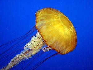 Jolting Jellyfish - estate planning attorney